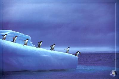 Leadership, Save Our Planet (Penguins) Art Poster Print