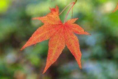 https://imgc.allpostersimages.com/img/posters/leaf-fall-colors-seattle-arboretum-washington-usa_u-L-PN72EK0.jpg?p=0