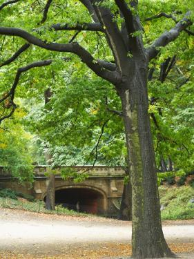 Leafy Tree and Bridge in Park in New York City