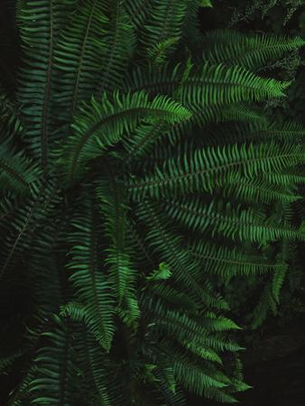 Fern Life by Leah Flores