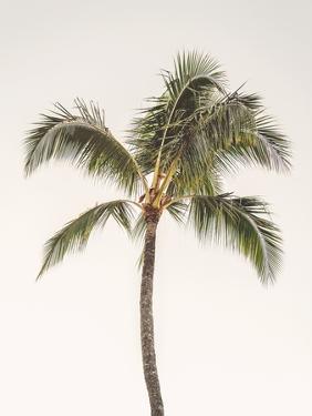 Rosy Palm Tree by Leah Straatsma