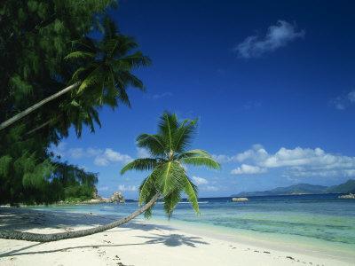 https://imgc.allpostersimages.com/img/posters/leaning-palm-tree-and-beach-anse-severe-la-digue-seychelles-indian-ocean-africa_u-L-P7NIYO0.jpg?p=0