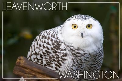 https://imgc.allpostersimages.com/img/posters/leavenworth-washington-snowy-owl_u-L-Q1GQGOR0.jpg?p=0