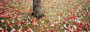 Leaves, Fallen