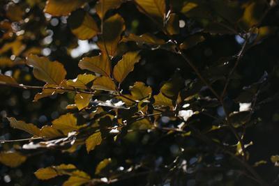 https://imgc.allpostersimages.com/img/posters/leaves-of-an-alder-in-summer_u-L-Q1EXL4T0.jpg?artPerspective=n