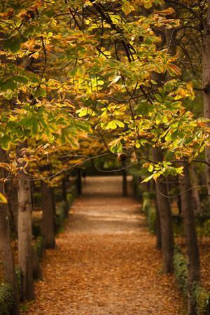 Leaves on plants in a park, Buen Retiro Park, Madrid, Spain