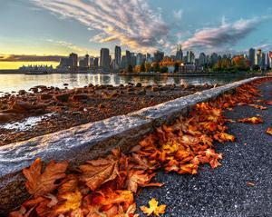 Leaves & Vancouver Downtown