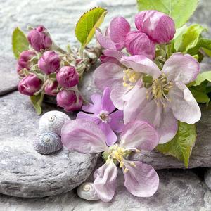 Apple Blossom - Square by Lebens Art