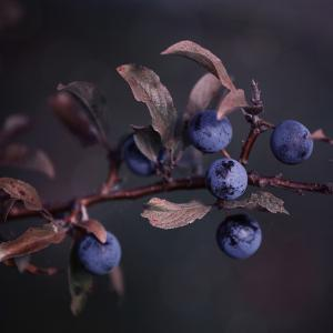 Autumn Berries - Square by Lebens Art