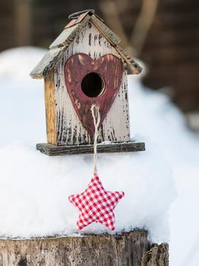 Bird House Winter by Lebens Art
