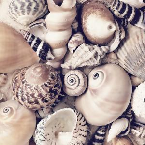 Sea Shells - Square by Lebens Art