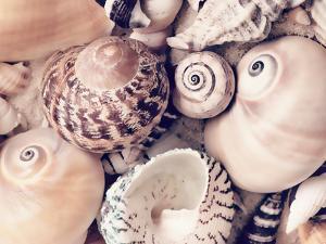 Sea Shells by Lebens Art
