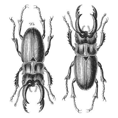 Stag Beetle - Square by Lebens Art