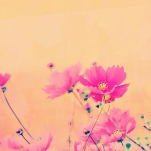 Summer Flower 2 - Square by Lebens Art