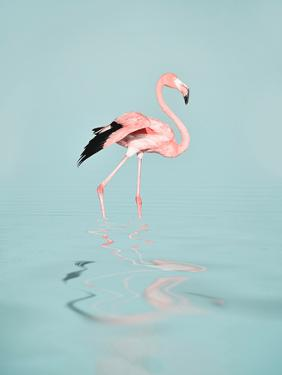 Tropical Flamingo by Lebens Art