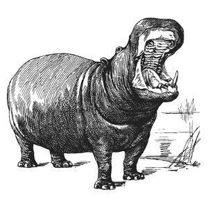 Vintage Hippo - Square by Lebens Art