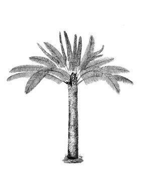 Vintage Palm Tree by Lebens Art