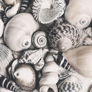 Vintage Shells - Square by Lebens Art