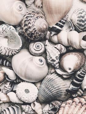 Vintage Shells by Lebens Art