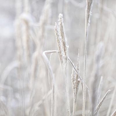 Winter Grass - Square by Lebens Art