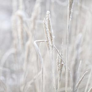 Winter Grass - Square by Lebens Art