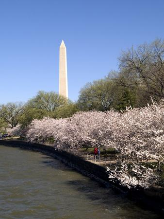 Cherry Blossom Festival, Washington DC, USA, District of Columbia