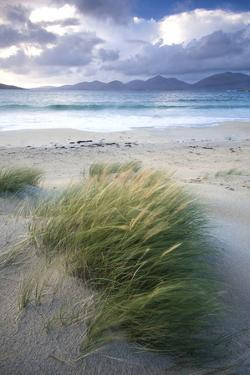 Beach at Luskentyre with Dune Grasses Blowing by Lee Frost