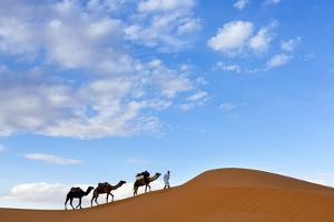 Berber Man Leading a Train of Camels over the Orange Sand Dunes of the Erg Chebbi Sand Sea by Lee Frost