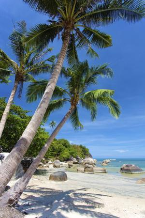Palm Trees and Lamai Beach, Koh Samui, Thailand, Southeast Asia, Asia by Lee Frost