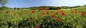 Poppy Field with Town of Pienza in Distance, Tuscany, Italy, Europe by Lee Frost