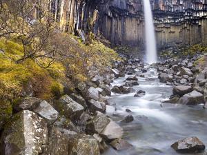 Svartifoss Waterfall in the Skaftafell National Park, Iceland, Polar Regions by Lee Frost