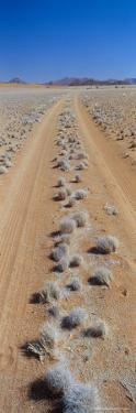 Track Through Sand with Scrub, Namib Road, Namib Naukluft Park, Namib Desert, Namibia, Africa by Lee Frost