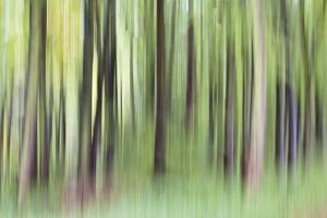 Woodland Whirl by Lee Frost