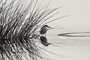 Bird 1 by Lee Peterson