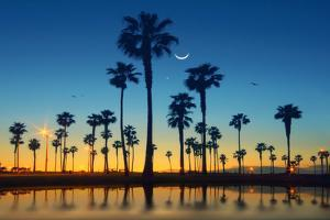 Row of Palm Trees by Lee Sie Photography