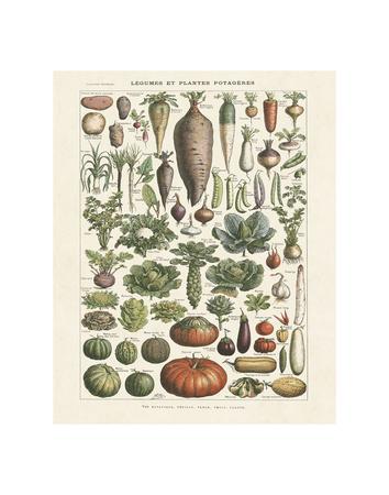https://imgc.allpostersimages.com/img/posters/legumes-i_u-L-F8IKKI0.jpg?p=0