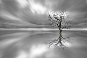 Ghost Tree by Leif Løndal