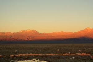 Sunset in the Desert - Atacama - Chile by Lelia Valduga
