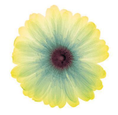 Lemon Nectar