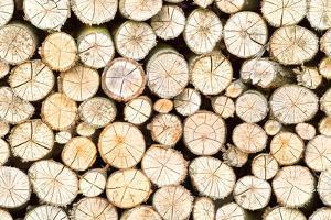 Firewood Free-Standing Stack, Seamless Pattern by Lena_Zajchikova