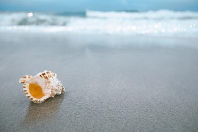 Sea Shell with Sea Wave, Florida Beach under the Sun Light, Live Action by lenka