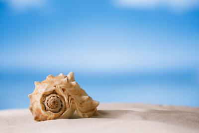 Tropical Shell on White Florida Beach Sand under Sun Light, Shallow Dof by lenka