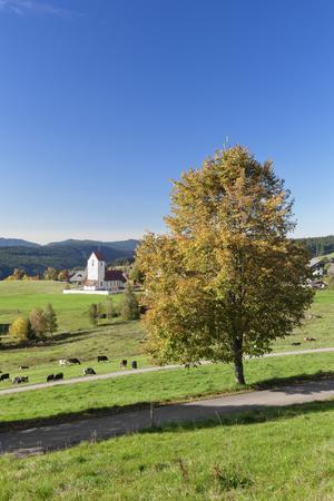 https://imgc.allpostersimages.com/img/posters/lenzkirch-saig-autumn-black-forest-baden-wurttemberg-germany_u-L-Q1EY8RR0.jpg?artPerspective=n