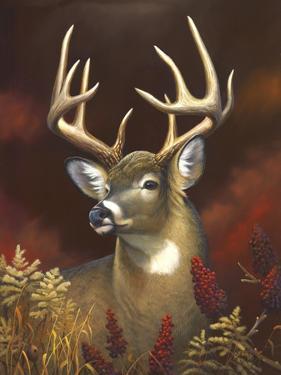 Deer Portrait by Leo Stans