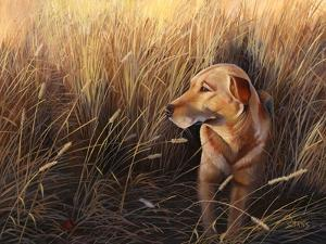 Golden Grass by Leo Stans