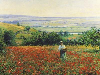In the Poppy Field