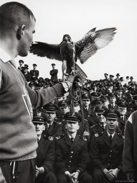 Air Force Academy Cadets Watching Handler Performing with the Air Force Mascot, a Falcon by Leonard Mccombe
