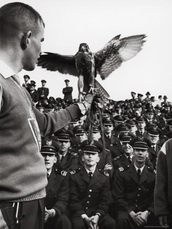 Air Force Academy Cadets Watching Handler Performing with the Air Force Mascot, a Falcon