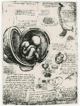 Anatomical Sketch of a Human Foetus in the Womb, C1510 by Leonardo da Vinci