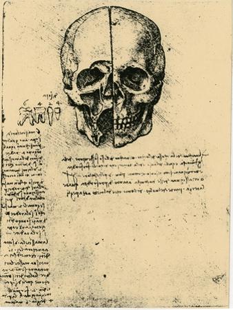 Anatomical Sketch of a Human Skull, C1472-1519 by Leonardo da Vinci